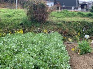 上櫛田駅跡付近の路盤の崖には丸石が積まれている